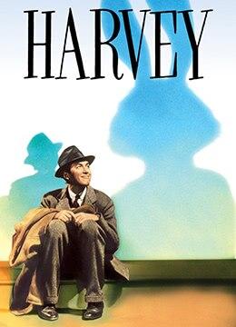 我的朋友叫哈维
