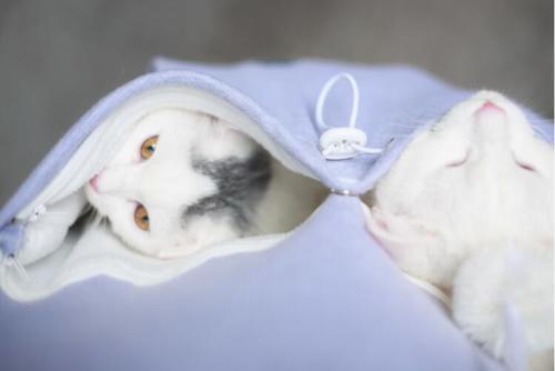 Cat lovers bluzy z cuddle etui dog pet bluzy dla kangura dorywczo swetry z uszy bluza 4xl drop shipping 26