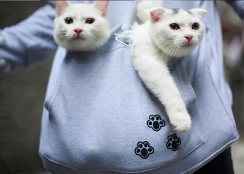 Cat lovers bluzy z cuddle etui dog pet bluzy dla kangura dorywczo swetry z uszy bluza 4xl drop shipping 25
